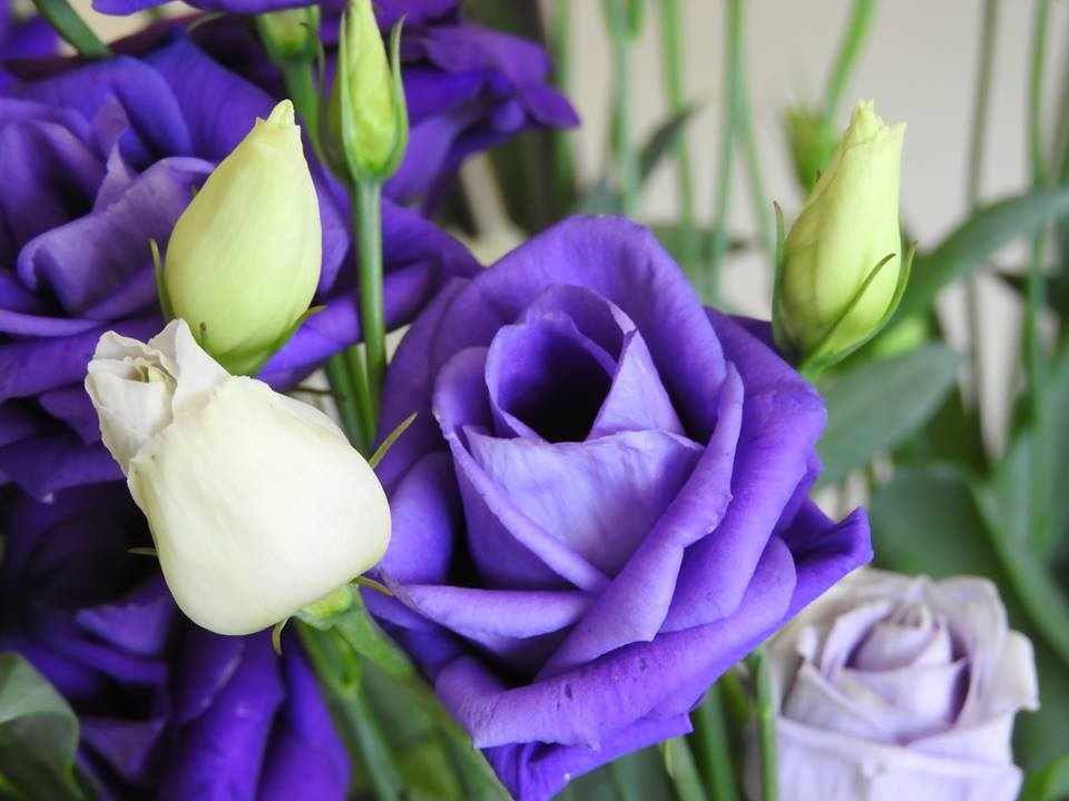 Florists In Wexford Buy Flowers Online Send Flowers