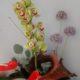 send flowers wexford