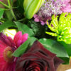 Selection of Flowers Bold Colours