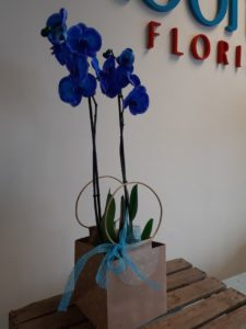 Mothers Day true blue