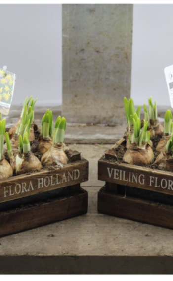 Tete Flora Box